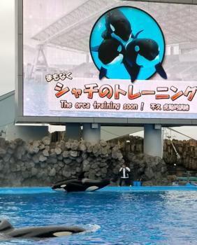 名古屋高水族館6.png