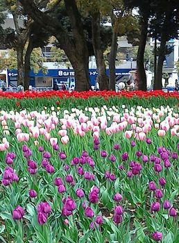 横浜公園.jpg
